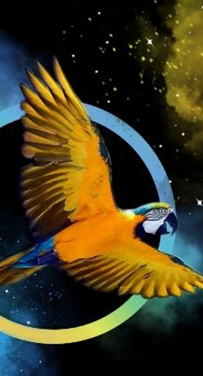 Manko the Macaw
